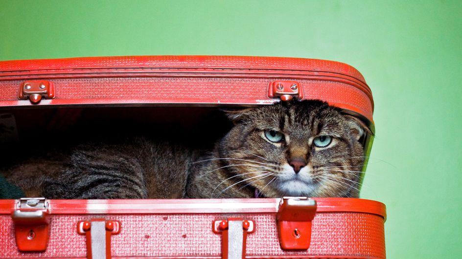 Divorce et séparation : qui garde l'animal de compagnie ?