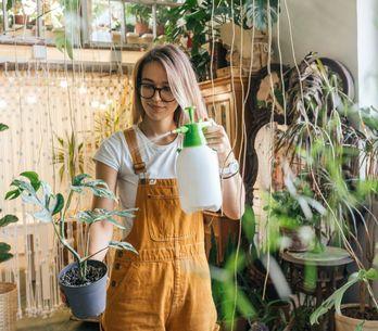 Piante da interno, le migliori 15 varietà da coltivare in casa