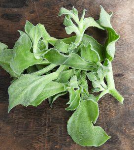 Connaissez-vous la ficoïde glaciale, cette salade au goût étonnant ?