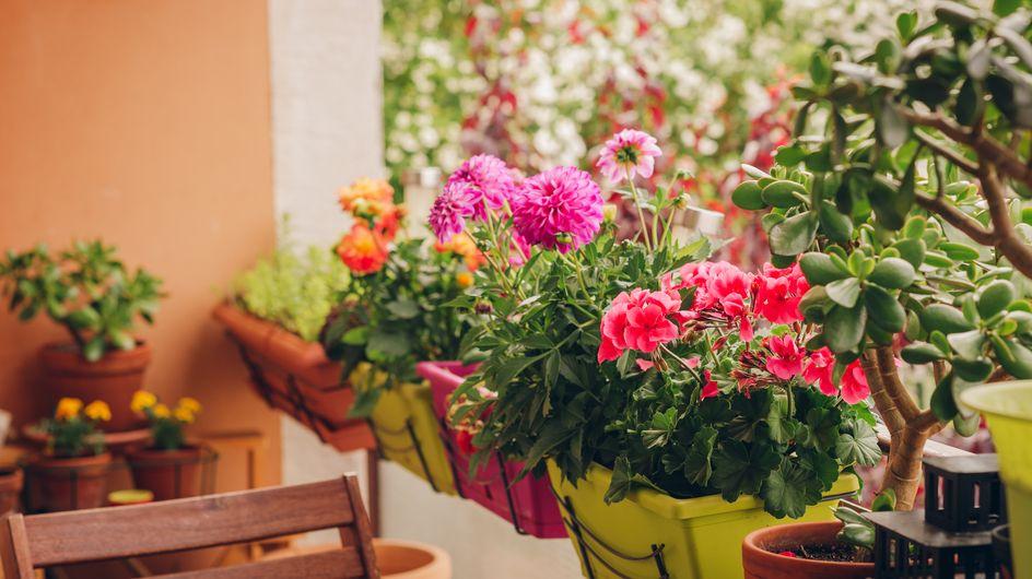 Balkonblumen: Die schönsten Pflanzen für Terrasse und Balkon
