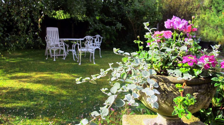Le più belle piante per il giardino da coltivare in vaso