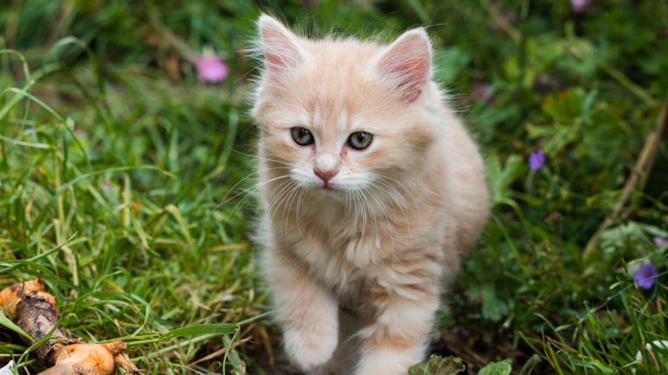 Piante velenose per gatti: quali sono le piante di casa non gradite al nostro micio e in che quantità