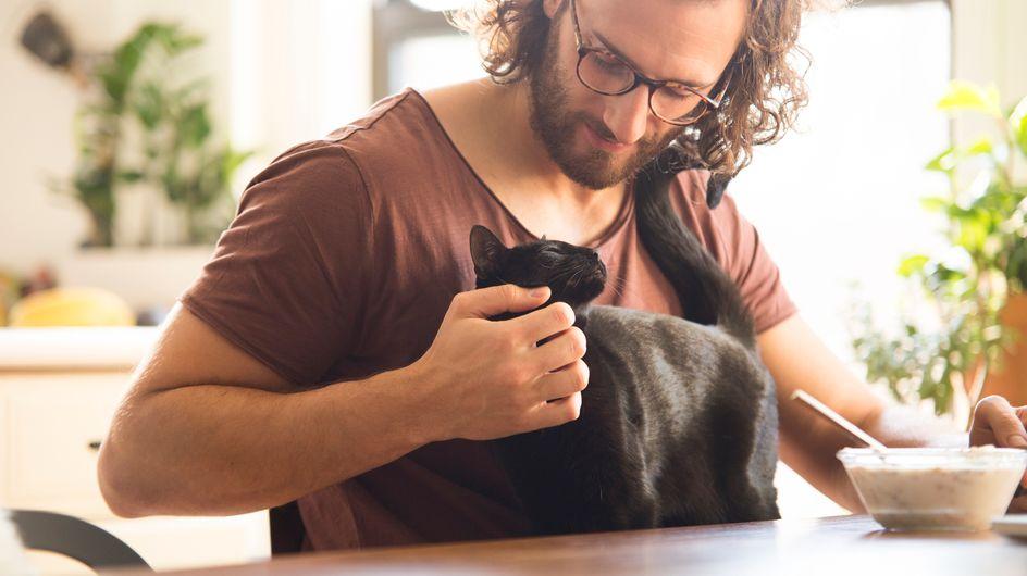La dieta BARF per il gatto: cos'è, pro e contro