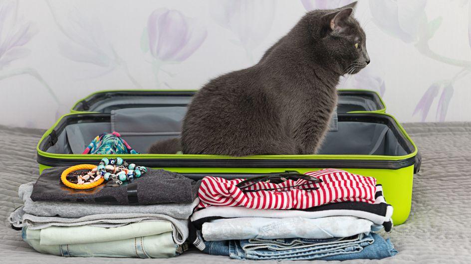 Les 8 trucs indispensables quand on voyage avec son chat