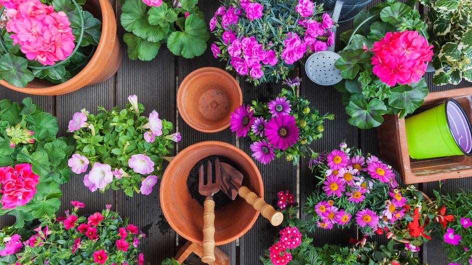 Fiori da balcone: ecco come ricreare un giardino fiorito in casa tua