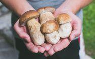 I funghi in allattamento sono pericolosi? Facciamo il punto.