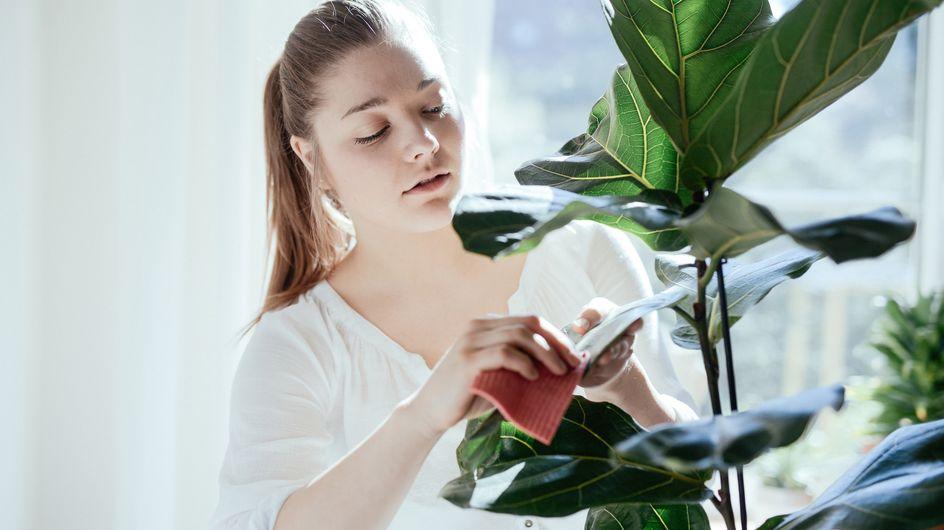 Come eliminare i pidocchi delle piante con rimedi naturali come l'aceto