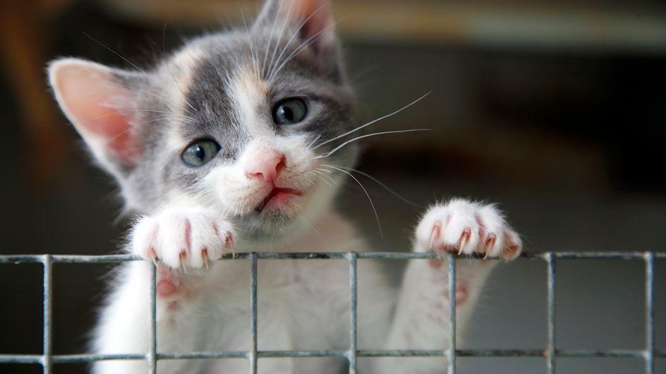 La SPA dévoile la liste des pires excuses d'abandon d'animaux qu'elle a entendues