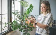 App per riconoscere le piante: le 10 migliori da avere sul tuo smartphone