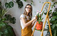 Come coltivare le orchidee: una guida semplice ed efficace