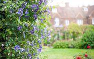10 piante da mettere in giardino che hanno una fioritura rigogliosa