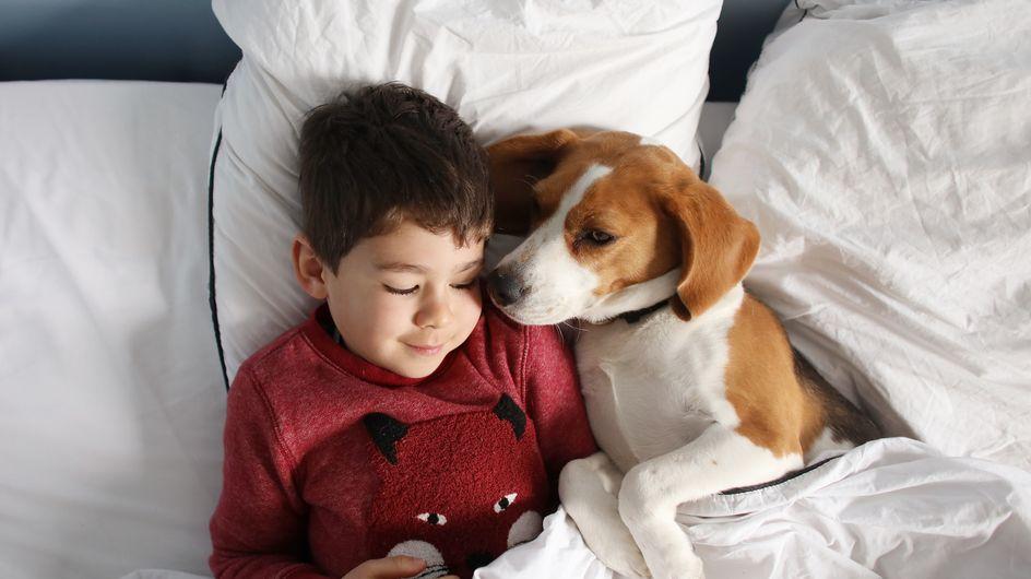 Est-ce dangereux pour un enfant de dormir avec son animal de compagnie ?