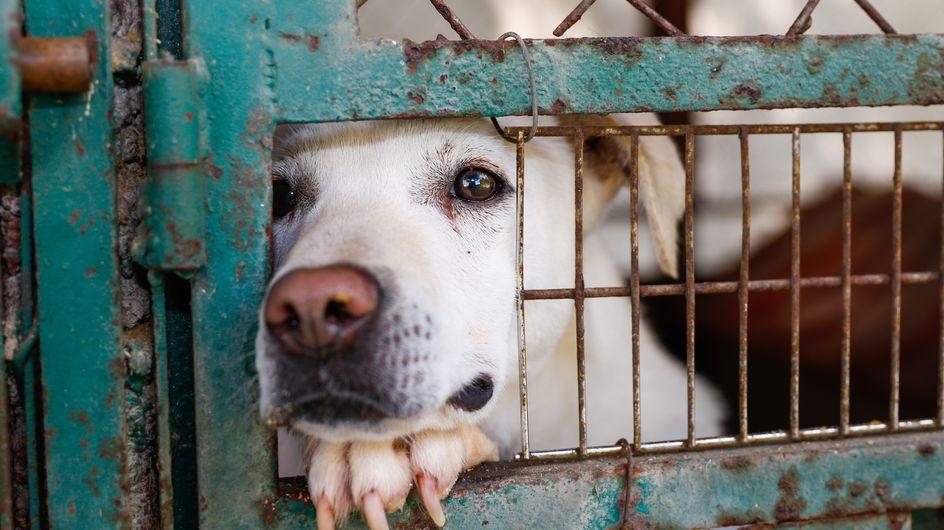 Les abandons d'animaux explosent, selon la SPA. Pourquoi ?
