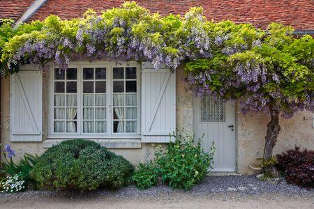 piante ornamentali da giardino: il glicine
