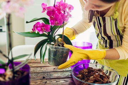 come curare le orchidee: la loro coltivazione all'interno richiede qualche accortezza