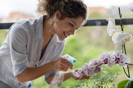 come curare le orchidee: ha bisogno di terriccio umido per una coltivazione ottimale