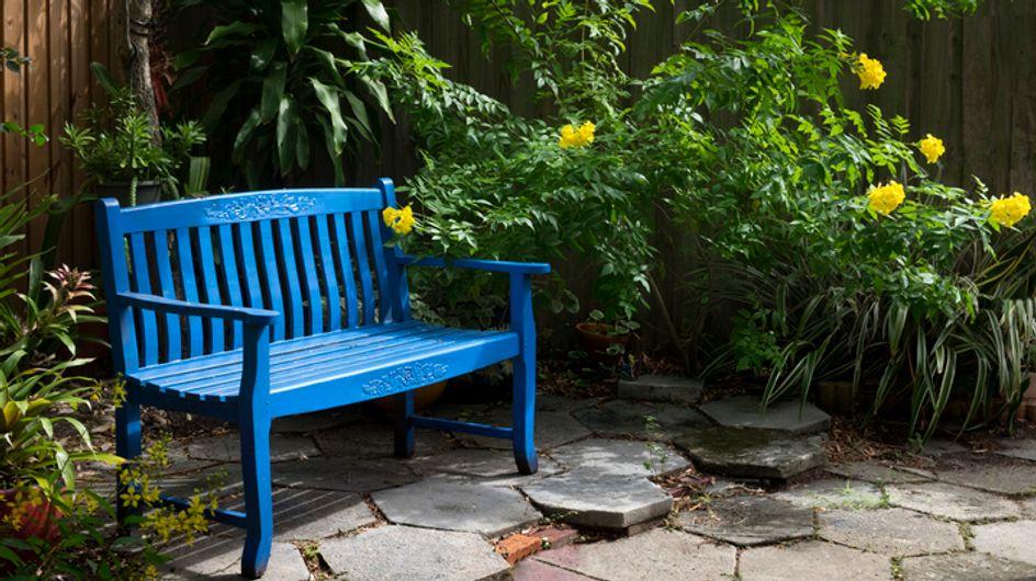 Piante sempreverdi da giardino: le migliori amiche della tua oasi all'aria aperta