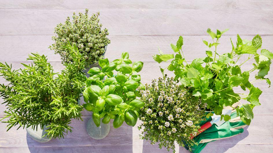 Piante aromatiche in vaso: dal basilico al prezzemolo, dalla salvia al rosmarino e alla lavanda per impreziosire il tuo balcone e le tue ricette