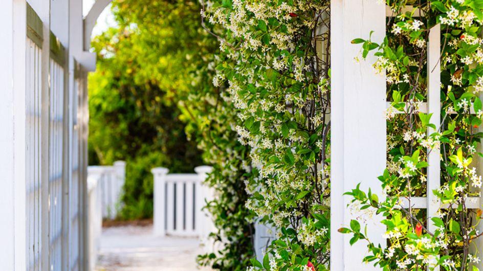 Piante rampicanti da esterno: le migliori sempreverdi e fiorite