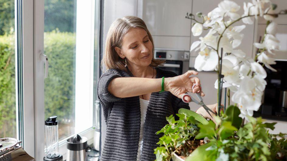 Come annaffiare le orchidee: una pianta elegante perfetta per un giardino o per il tuo appartamento