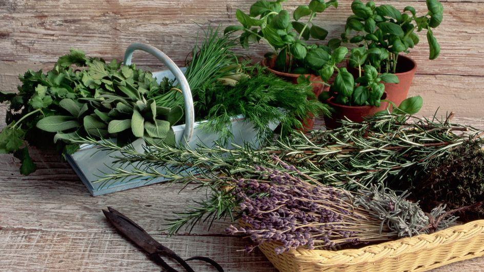Le 7 piante aromatiche perenni che resistono al freddo