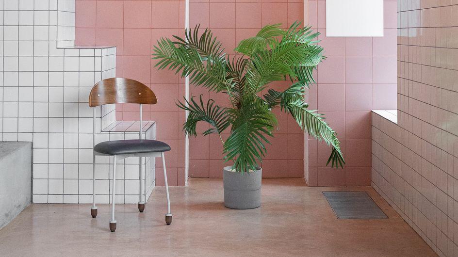 Lidl : cette plante exotique à moins de 10€ va pimper votre maison