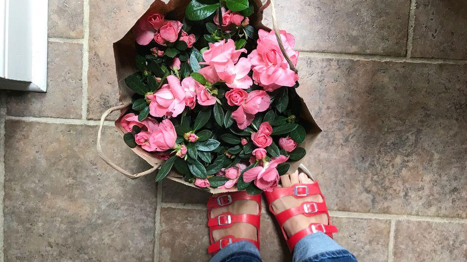 Azalea: come curarla al meglio. Tutte le dritte per coltivarla