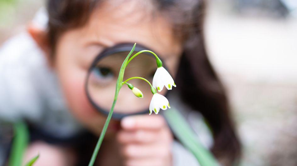 Il fiore e le sue parti: immagini e concetti semplici per i bambini della scuola primaria