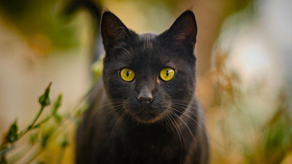 Un chat noir héroïque sauve son humaine de 83 ans tombée dans un ravin