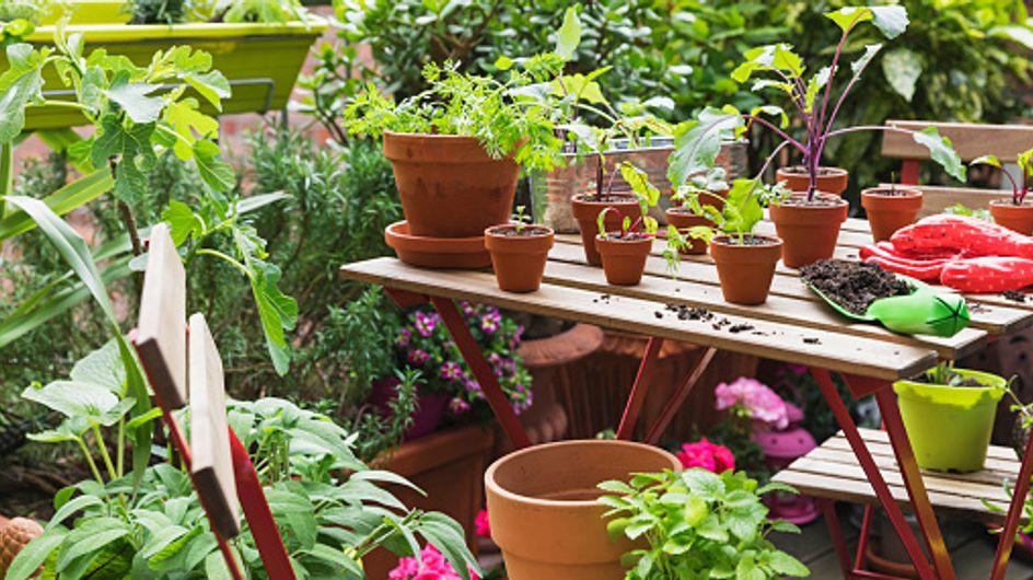 Piante sempreverdi da balcone: la magia del verde per tutto l'anno su terrazzo e balcone