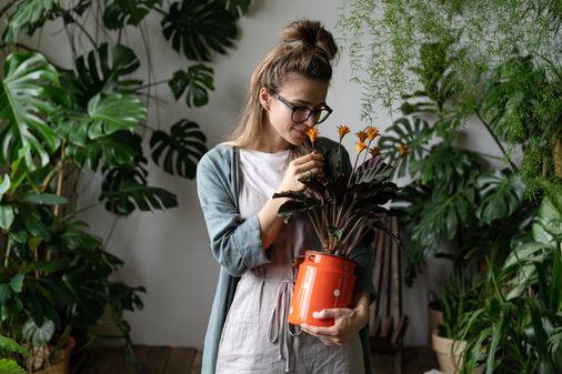 Piante verdi da interno: ecco le più belle da tenere in casa