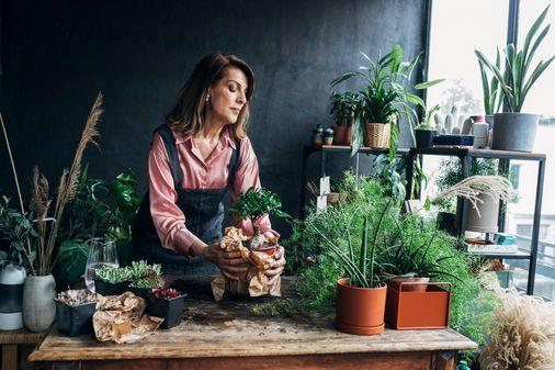 Piante verdi da interno: scopri le specie più facili da coltivare
