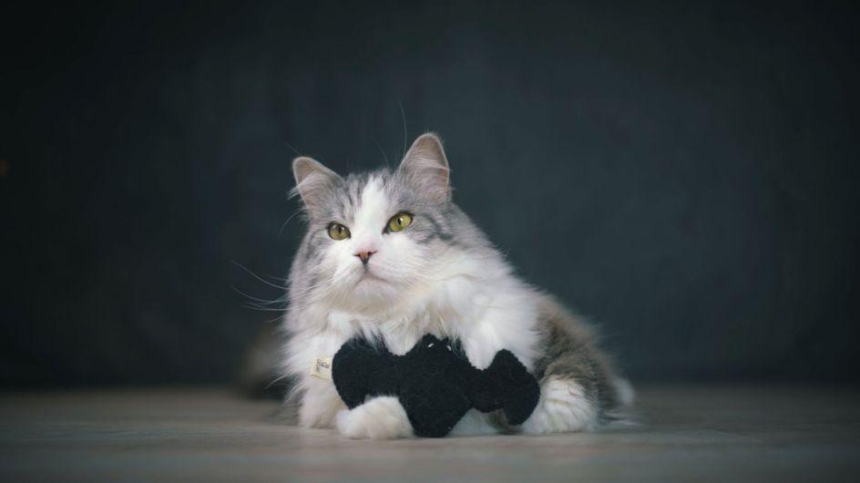 Catlabs aus DHDL: Dieses Spielzeug wird eure Katze lieben