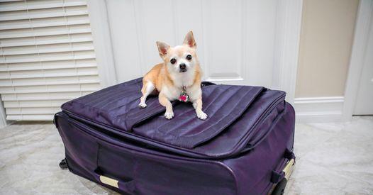 Insolite : Partis en vacances, ils découvrent leur chien caché dans la valise