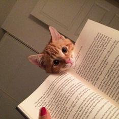 Loro stanno leggendo, ma ai gatti non interessa: vogliono le coccole!