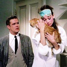 8 motivi per cui preferire il tuo gatto al tuo fidanzato