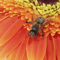 Cosmetici insoliti? Quelli al veleno d'ape! Come agiscono, quali scegliere