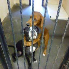 Deux chiens sauvés de l'euthanasie grâce à la mobilisation des internautes