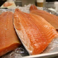 Le gras du poisson, une arme contre l'obésité