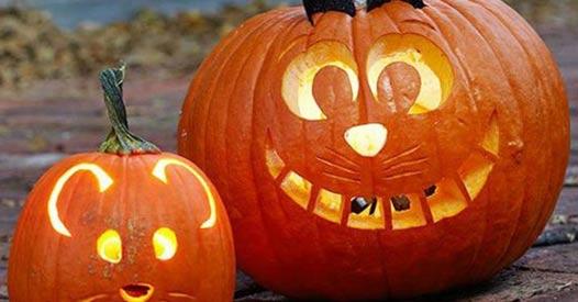Kürbis Schnitzen Ideen.Kürbis Schnitzen So Einfach Gehen Die Halloween Kunstwerke