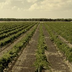 Una escapada con encanto, buen vino y mucho relax, ¡descúbrela!