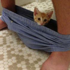 35 imágenes de gatos que invadieron sin ningún pudor tu espacio personal