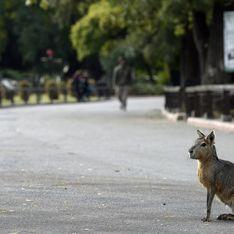 Le zoo de Buenos Aires va libérer 1 500 animaux