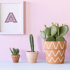 6 conseils pour entretenir vos cactus
