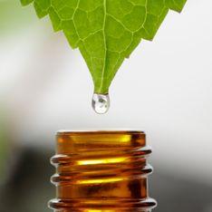 Tea tree oil: usi e proprietà dell'olio dai mille benefici