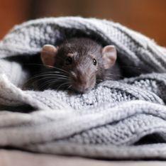 Una mujer encuentra un ratón cosido en su vestido de Zara