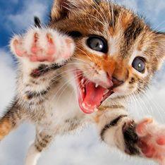 Bebes de gatos saltando: La última y tiernísima moda viral