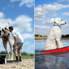 OMG! Dieser Riesen-Hund und sein Besitzer sind der Knaller