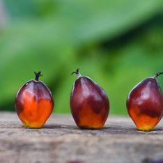 Esto es lo que provoca en tu organismo el consumo de aceite de palma