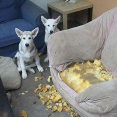 Ach du Kacke: DAS kann passieren, wenn man Hund, Katze & Co. alleine zu Hause lässt